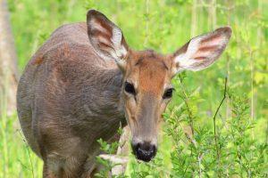 Feed the Animals @ Short Hills Provincial Park | San Antonio | Texas | United States